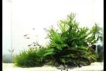 Terrainuims, aquariums and other things