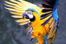 Parrots :) / papugi to coś co kocham ♥♥