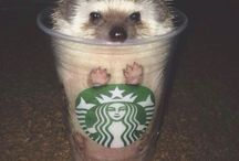 Hedgehogs!!!! & other cute things