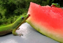 Reptiles / Snakes, lizards and other reptiles