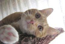 Cutei CATS / Meow !