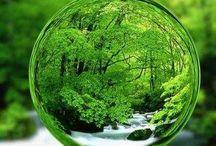 Green Color / 緑色