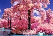 ! Beautiful nature !