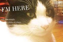 猫と庭 / 我が家の猫と庭写真や 猫や庭関連の記事とか
