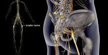 Sciatica, sciatalgia e nervo sciatico infiammato / Soluzioni efficaci per curare sciatica, sciatalgia e nervo sciatico infiammato. Rimedi naturali, trattamenti e cure per eliminare il dolore e i sintomi legati a sciatica, sciatalgia, lombosciatalgia, mal di schiena e nervo sciatico infiammato.