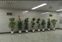 plants (friends)