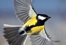 Birdzzz