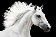 *Andalusian