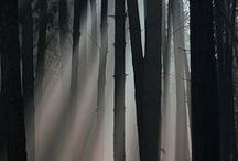 Forêts du monde / Les plus belles forêts et bois du monde.