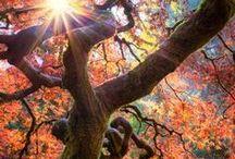 Arbres du monde / Les plus beaux ou étonnants arbres dans le monde. De quoi s'apercevoir de l'incroyable diversité des arbres.