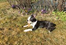 Bennys gear / Tips og ting og tang til hunder