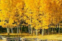 Merveilles d'Automne / Les plus beaux paysages de l'Automne. De l'orange, du jaune, des feuilles mortes et des lueurs ocres.