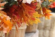 Celebrate : Autumn