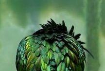 green / by Simone Bosbach