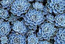 blue / by Simone Bosbach
