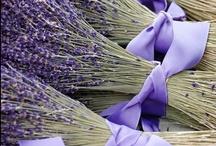 Lovely Lavender / by Kristin Vargas-Nielsen
