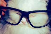 Animals wearing glasses / A small collection of our animal friends wearing glasses!