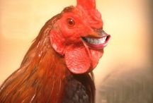 Chicken - The other White Meat