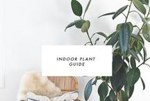 House: plants & garden / Indoor and outdoor plants - how to care, grow, prune and keep alive :)