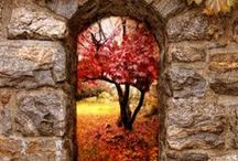 Celebrate : Fall & Harvest 2 / by Kristin Vargas-Nielsen