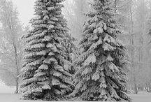 Celebrate : Winter 2