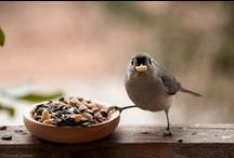 ~*~ For The Birds ~*~ / Little Fat Birds, Nests, Birdhouses & Such  / by ~*~ Cindy ~*~
