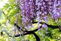 Gardening & Outdoors / gardening / by Katherine Fuller