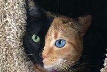 Chats et félins en sourires doux / Les chats, si fragiles, si résistants, si différents les  uns des autres, les chats ronronnent sur nos rêves...
