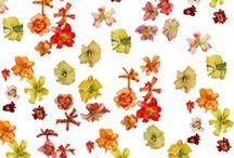 My Patterns - Day Lillies / Pattern Collection by Courtney Miller Bellairs  copyright 2014
