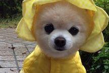 Γλυκκκκάκιααα ^.^ / Μωρά,Σκυλιά&Γατιά