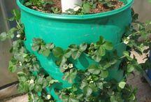 Záhrada - dobré nápady / Inšpirácie, návody