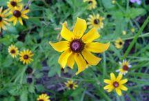Wildflowers! / by Karen Foley