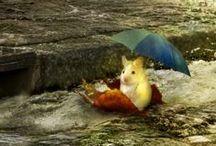 Umbrellas! / Dreaming of raindrops... and sunshine!