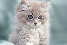 Cats / by Melanie Ornelas