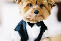 Dog of Honor / Doggies wedding wear
