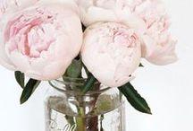 Mason Jars / by Lovegevity's Wedding Planning Institute