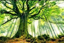 Mental Garden / KELTA: https://hu.wikipedia.org/wiki/Kelta_fakultusz  INDIÁN: http://www.vilagok.hu/index.php?option=com_k2&view=item&id=430:gyogyito-fak-az-indian-a-fat-magaval-egyenrangu-lenynek-tekinti&Itemid=581  GÖRÖG: http://members.iif.hu/visontay/ponticulus/rovatok/hidverok/suranyi_gorog.html
