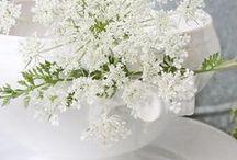 Lifestyle ° / Life style, flowers, random, details,