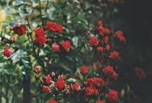 Flowers / by Alix Bioutifulface