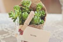 Succulent Wedding Favors / Beautiful and Creative ways to use succulents as favors for weddings and other events.  Succulent favors won't get tossed in the trash or stuffed in a drawer!  Visit us at  www.thesucculentsource.com for all your succulent favor needs!