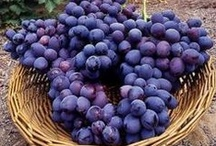 Color : Purple