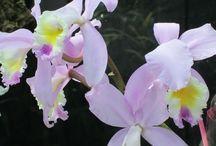 "Secret Garden / ""And the secret garden bloomed and bloomed and every morning revealed new miracles."" - Frances Hodgson Burnett, The Secret Garden / by Eileen Pollan"