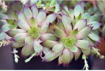 Succulent Color Palettes