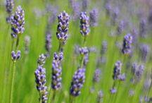 Aromaterápia, Natúrkozmetika