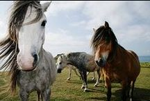 Horse Photography / Beautiful photos of horses from the world's best photographers