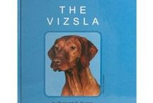 Vizslas: All About the Velcro dogs / Photos and links to sites with information about our favorite breed