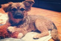 Adopta!! - Terrenito Asos / Para adoptar: nuestroterrenito@gmail.com
