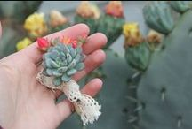 """Succulent Bouquets by TheSucculentSource / We have just newly started selling succulent bouquets to brides! So if you are getting married and want a succulent only bouquet then please check out our site @ www.thesucculentsource.com and go to """"Bridal Party Needs"""" for all of our arrangements for purchase! Everything is customizable upon your requests. So request away!"""