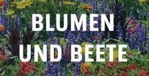 Blumen und Beete / Üppige Blumenbeete sind der Traum eines jeden Hobbygärtners. Damit die verschiedenen Beete richtige Hingucker werden, sind die verschiedenen Blühphasen zu beachten. Durch immerblühende Beete wird der Garten das ganze Jahr über zum absoluten Lieblingsplatz. Hochbeete aus Holz verleihen einem Garten besonderen Charme.