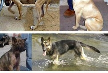 Animal adoption, rescue, and abuse... / by Jody Arafat
